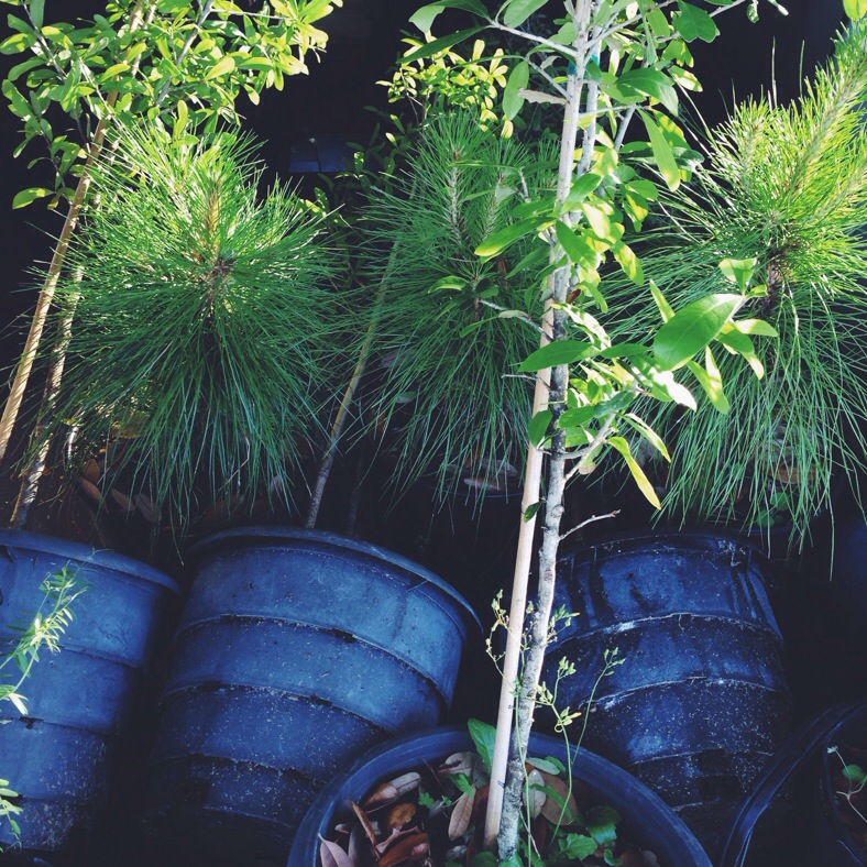 new trees to plant